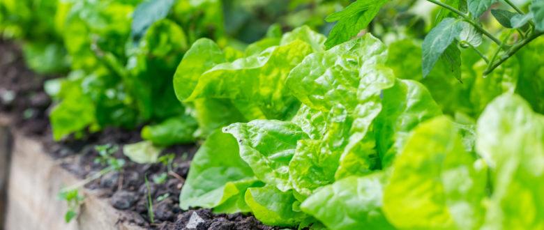 Reunião da Câmara Temática de Agricultura Orgânica discute portarias em consulta pública