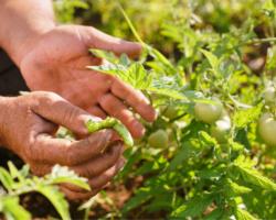 Sociologia rural – agroecologia e produção orgânica