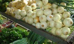 Redes sociais ajudam produtores orgânicos a expandir seu negócio